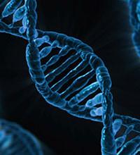 AGAを発症しやすい体質は遺伝する